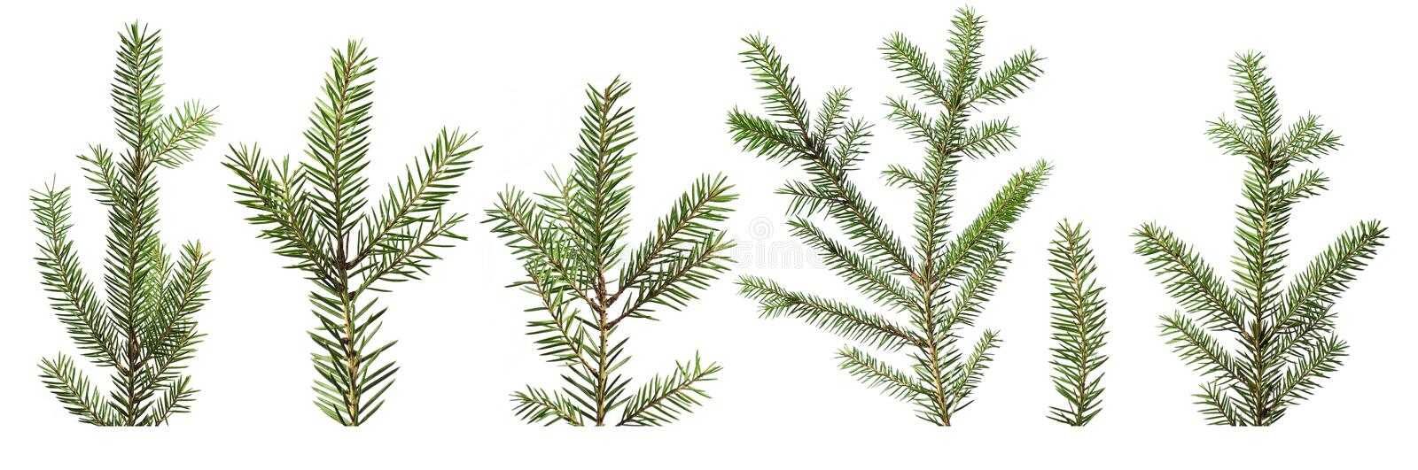 Download Fir tree branches stock photo. Image of decorative, isolated - 22094756