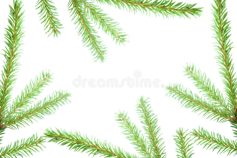 Fir tree branches, christmas decoration. stock images
