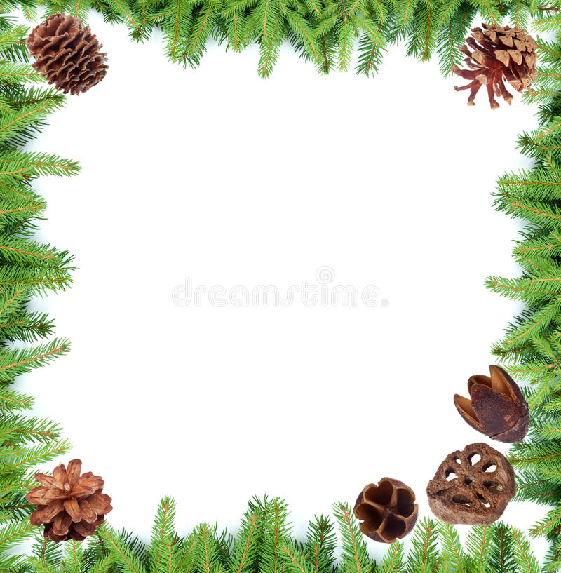 Download Fir tree branches frame stock image. Image of border - 27875967