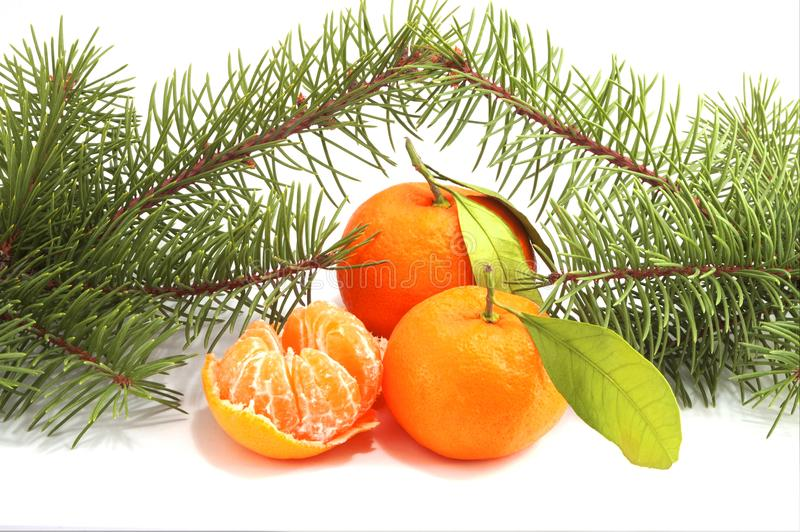 Fir-tree branches with tangerines royalty free stock photos