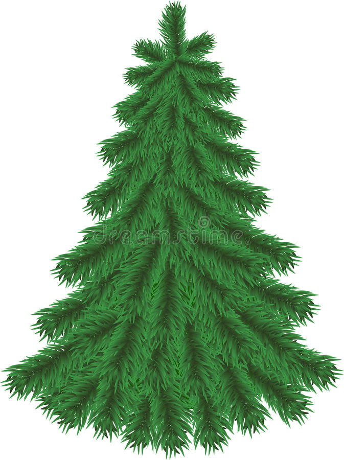 Fir Tree Without Christmas Decorations Stock Images