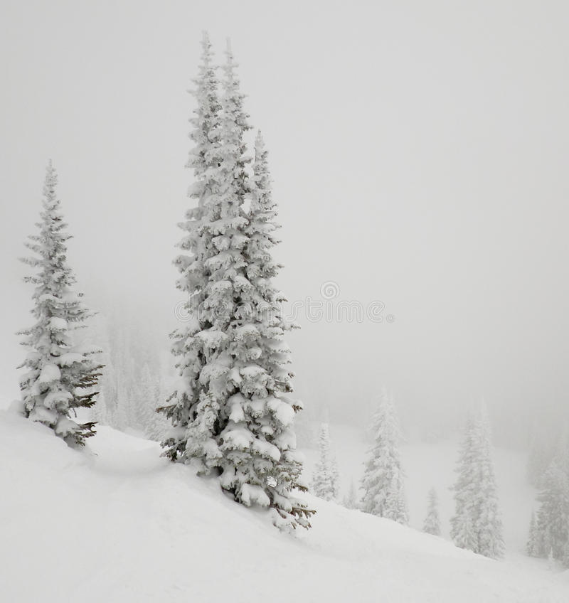 Download Fir Tree Covered With Snow. Royalty Free Stock Photography - Image: 26083087