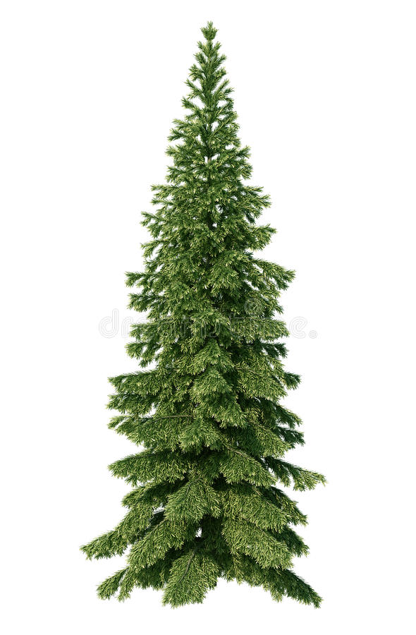 Download Fir Tree Stock Images - Image: 32267614