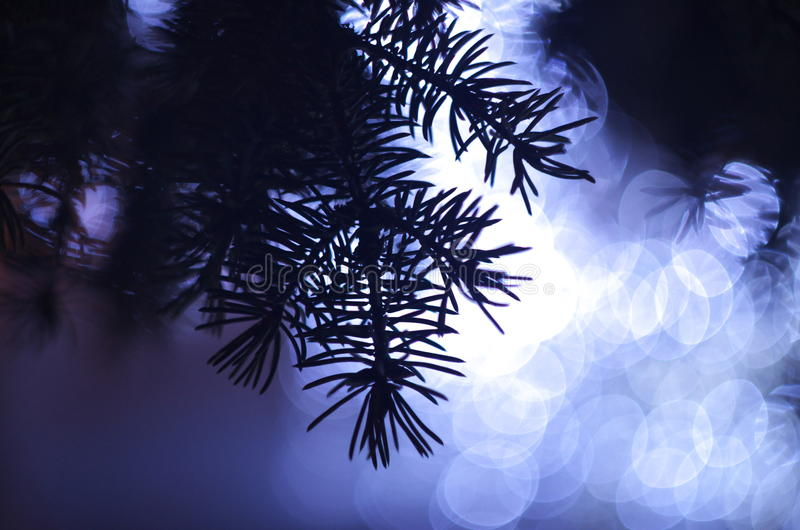 Fir-tree royalty free stock images