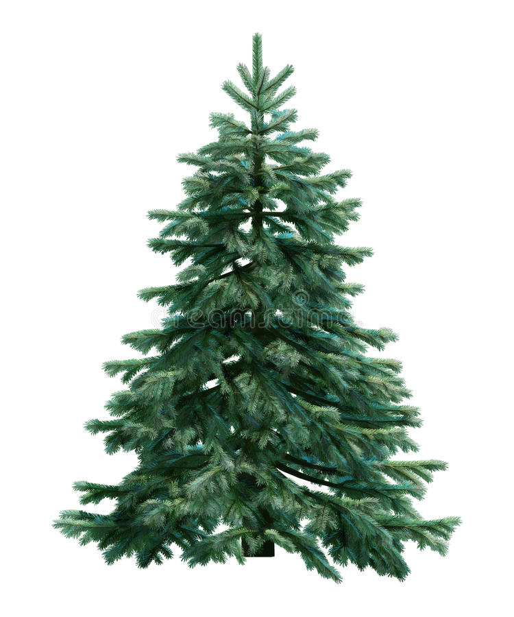 Free Fir-tree Isolated On White Stock Photo - 16107970