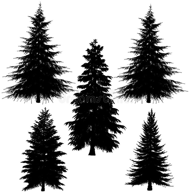 Fir-tree silhouette. At the white background royalty free illustration