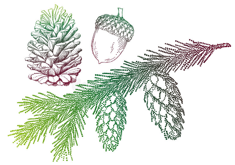 Fir tree, vector. Fir tree with pinecone and acorn, vector background vector illustration