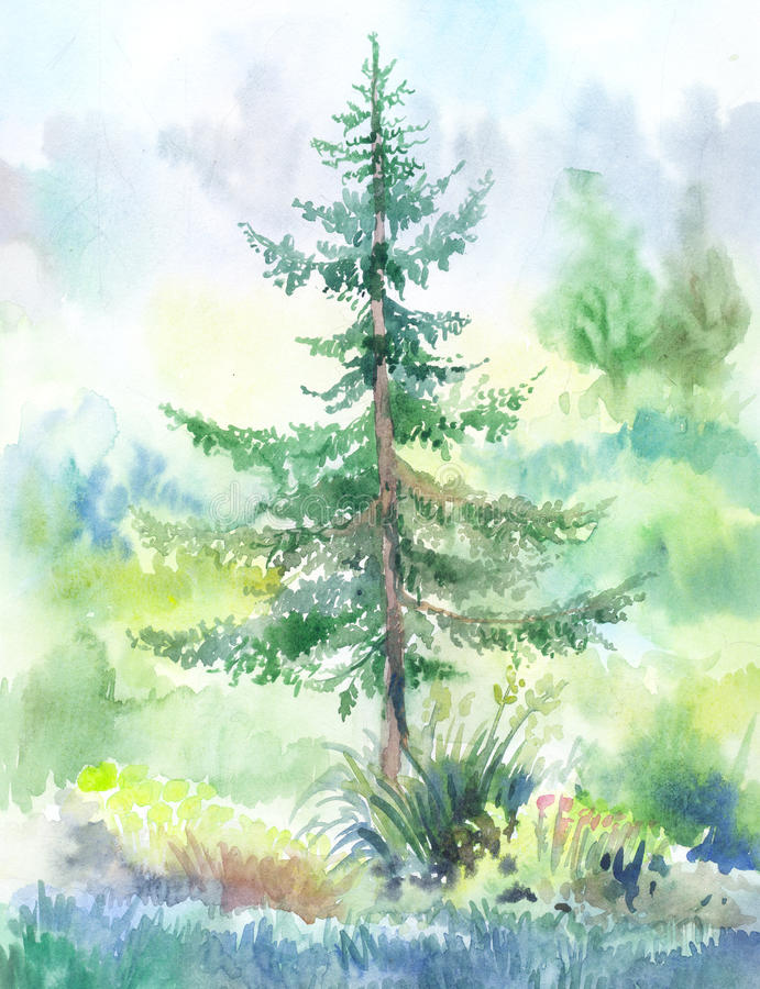 Fir-tree watercolor. Fir-tree, watercolor painting. Hand drawn landscape painted on wet paper royalty free illustration