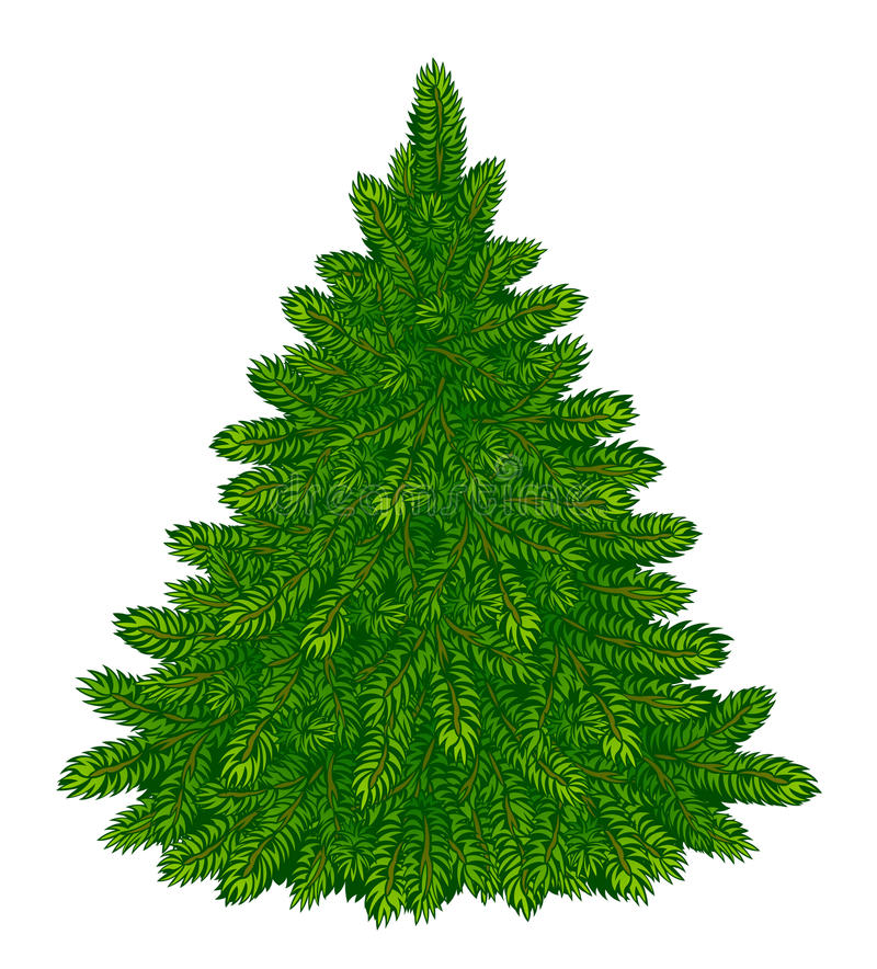 Fir-tree. On a white background stock illustration