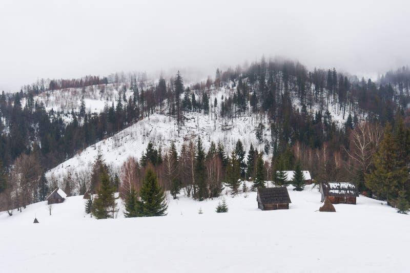 Fir-trees και σπίτια αγροτών στα χιονισμένα βουνά, Carpathians, Ουκρανία στοκ εικόνα