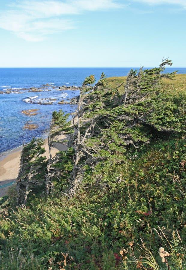 Fir trees by the ocean