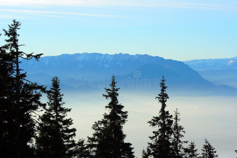 Fir trees over a foggy valley. And a mountain ridge royalty free stock photography
