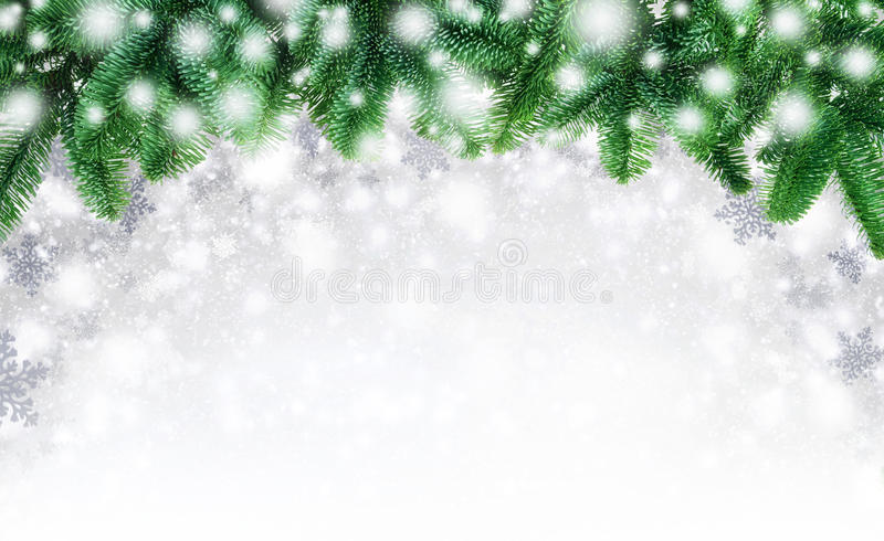 Fir twigs and snow background. Winter or Christmas background composed with an arch of fir twigs and snowflakes, blending into white copyspace as they fall stock images
