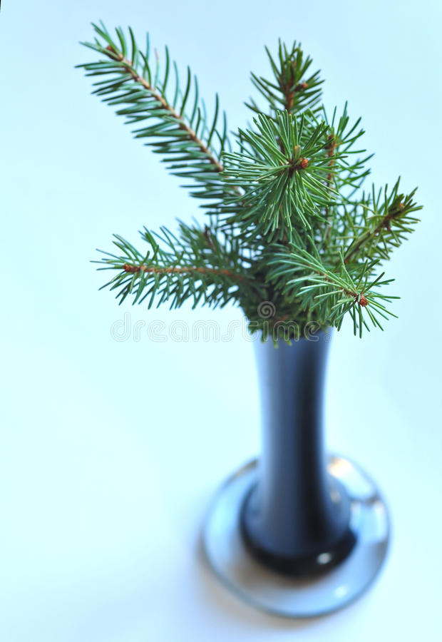 Download Fir in the vase stock image. Image of branches, outside - 27520615