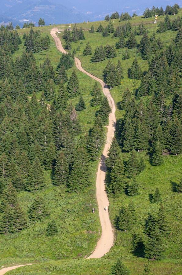 Fir Woods Of Kopaonik National Park, Serbia royalty free stock photos