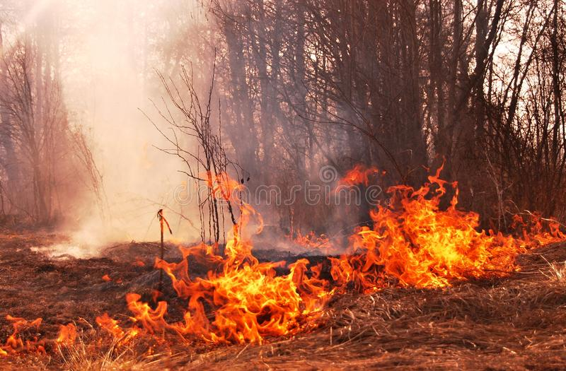 Download Fire stock image. Image of ecology, trees, grass, catastrophe - 20106955
