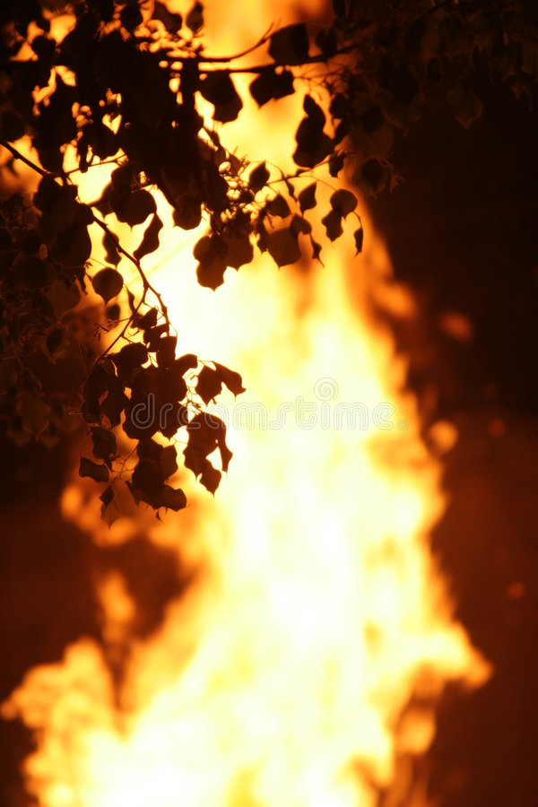 Fire. Strong fire in a wood with silhouettes of leaves royalty free stock images