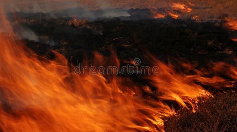 Fire Free Stock Photo