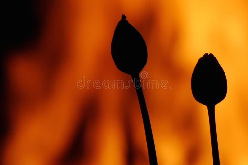 fire blossom bud stock photos