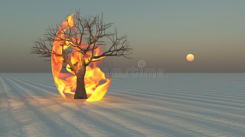 Fire burning around tree in desert
