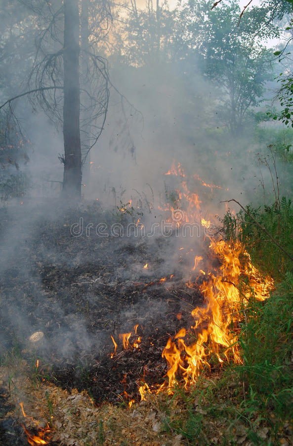 Fire Burning In A Forest Royalty Free Stock Photo