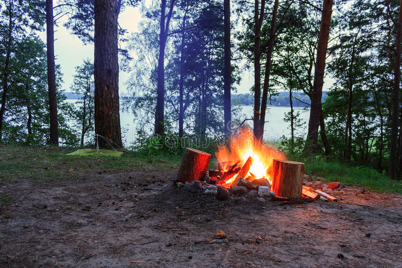 Fire burning in the forest royalty free stock photo
