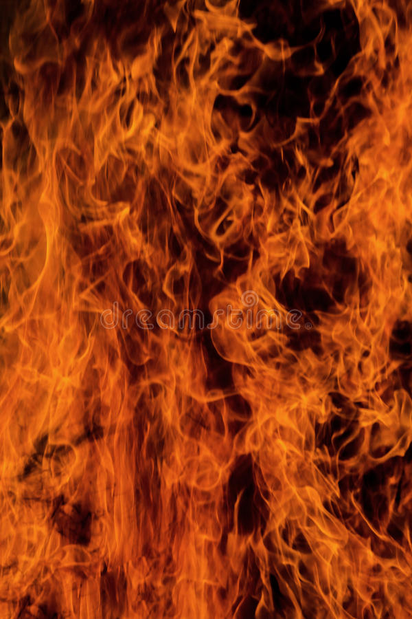 Fire, burning grass and small trees. stock image
