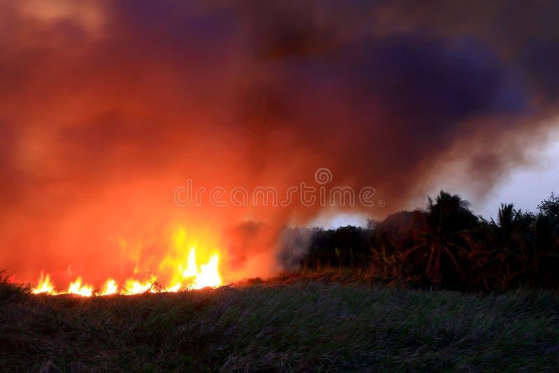 Fire burning wild through bushland stock photos
