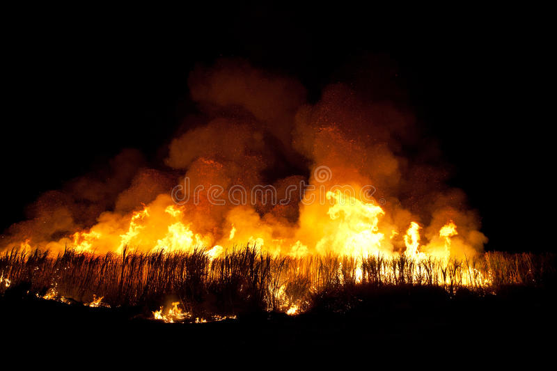 Fire!. Controlled fire in a sugar factory in Brazil royalty free stock photography