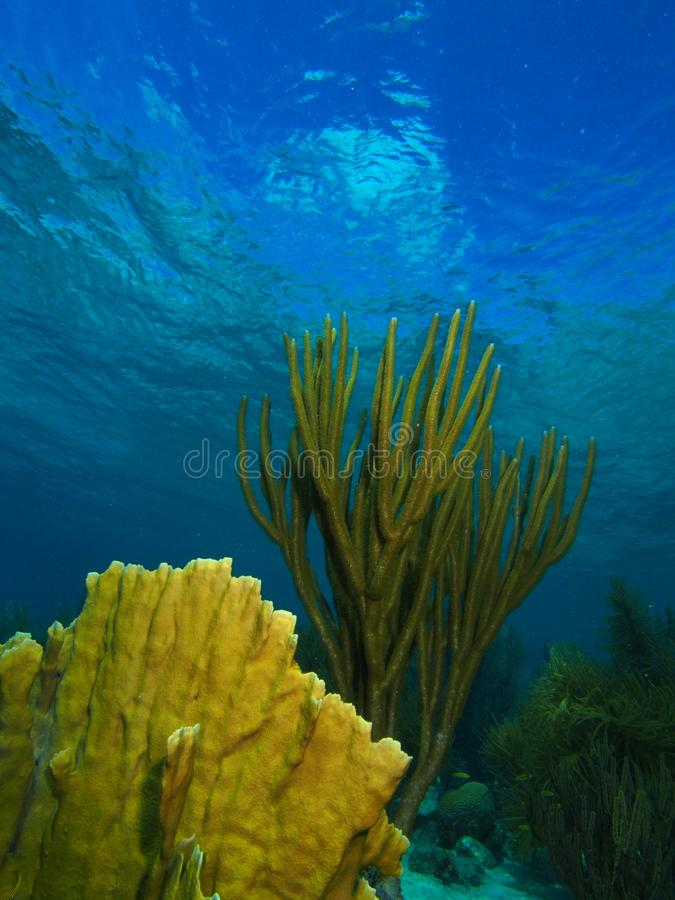 Download Fire Corals And Soft Corals Stock Image - Image of psedoplexaura, blade: 88369199