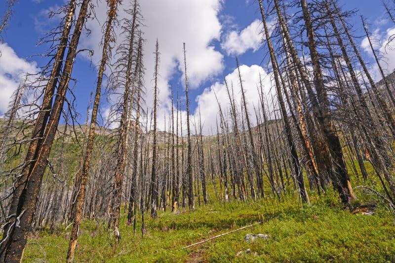 Download Fire Damage On A Mountain Ridge Stock Image - Image of lake, trees: 33369323