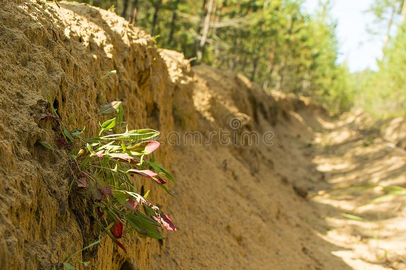 Fire ditch in the forest. A fire ditch in the forest. plant on the slope of the ditch.preventive action. protection of forests from fires. Fire safety stock photos