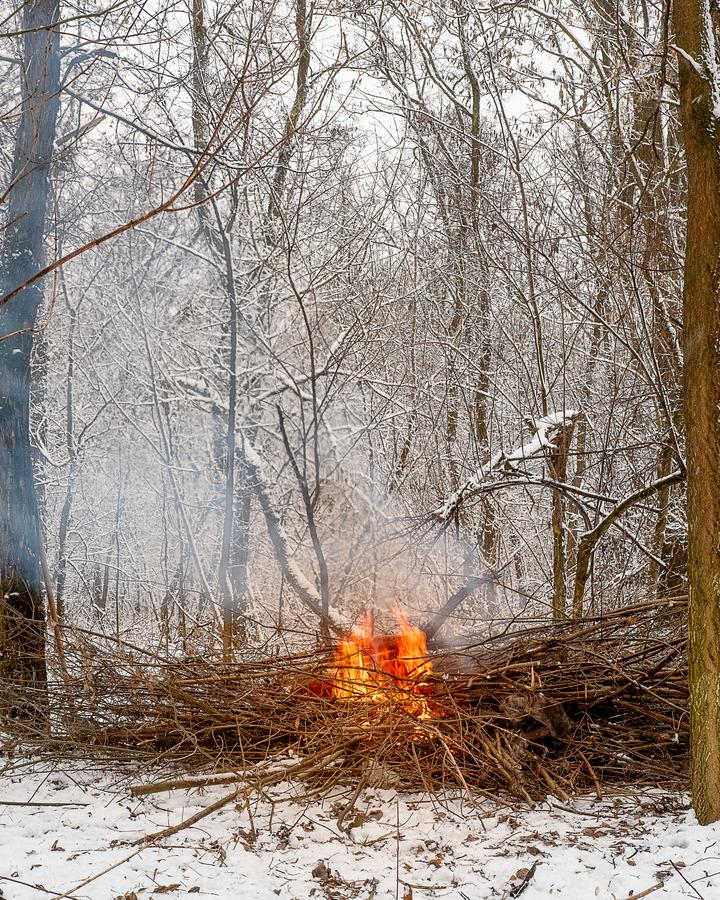Fire of dry branches burns brightly in the grove on a winter stock image