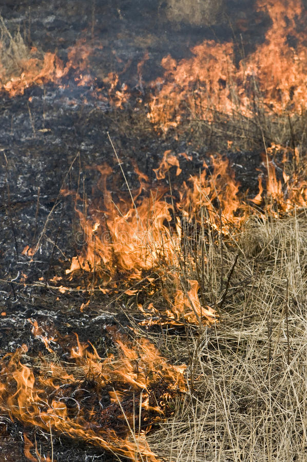 Fire in dry grass. Shooting outdoor on spring royalty free stock image