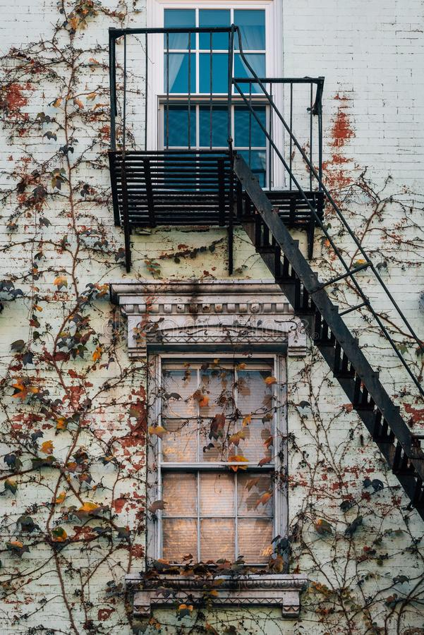 Fire escape with vines on a building in the East Village, Manhattan, New York City royalty free stock images