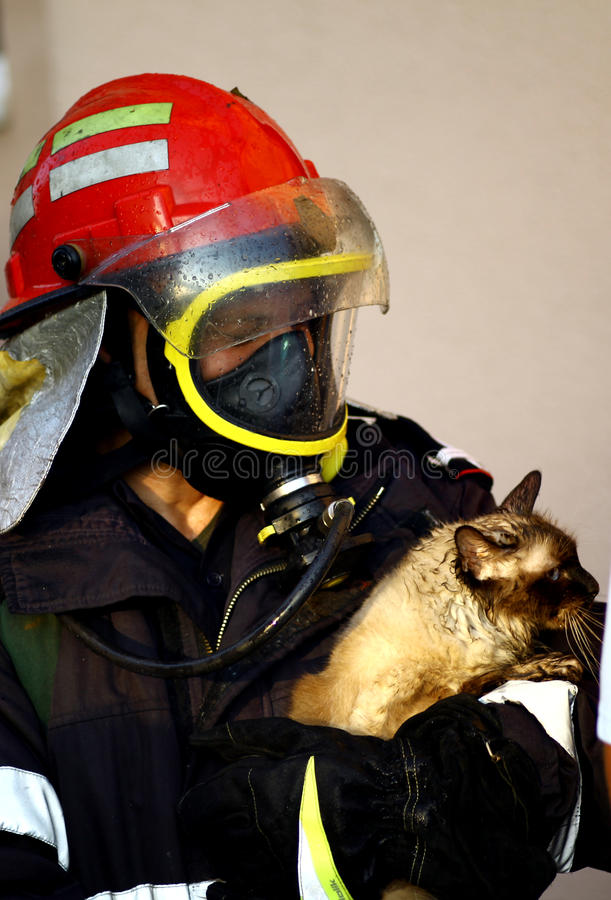 Fire fighter saving cat royalty free stock photos