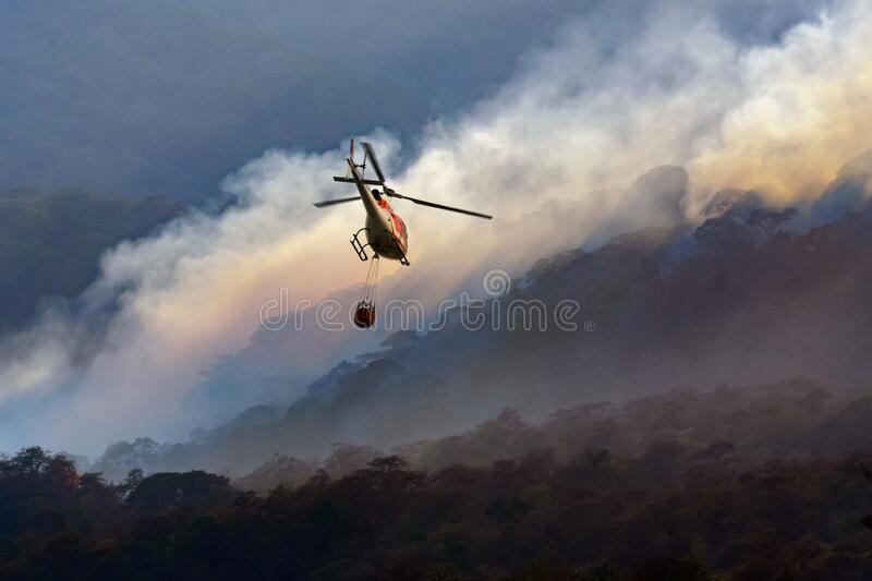 Fire fighting helicopter carry water bucket to extinguish the forest fire royalty free stock image