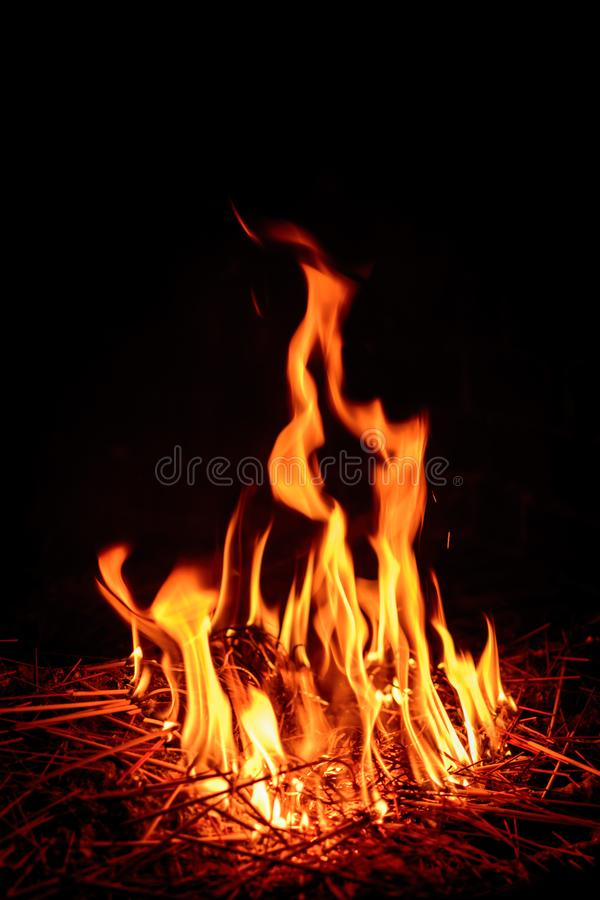 Download Fire flame stock photo. Image of fiery, black, beautiful - 96824920