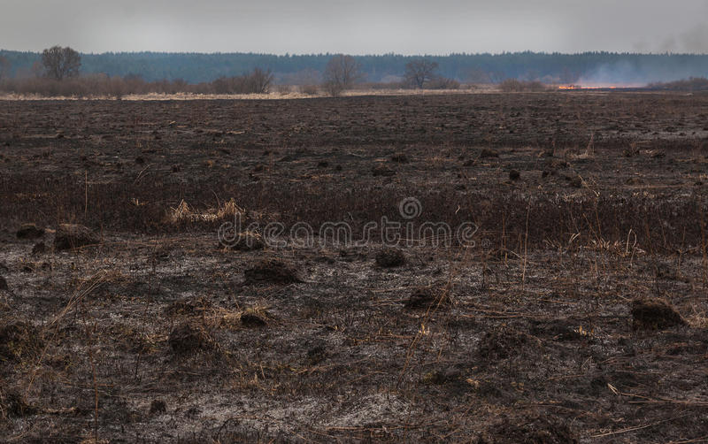 Fire on flood plains. Burning grass in the spring dry meadow stock photo
