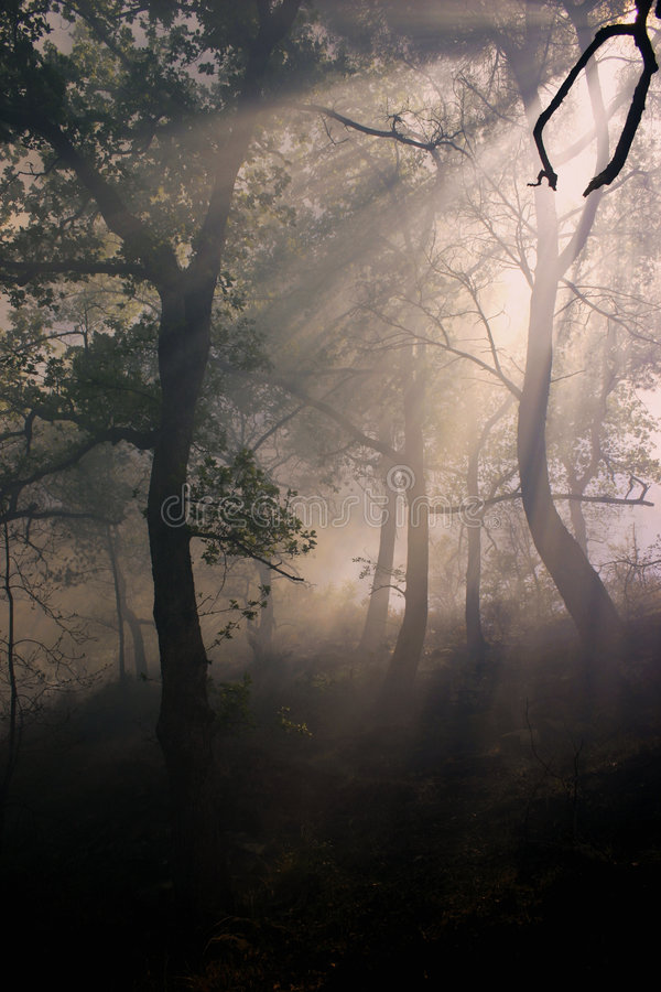 Fire and fog. In a young forest stock image