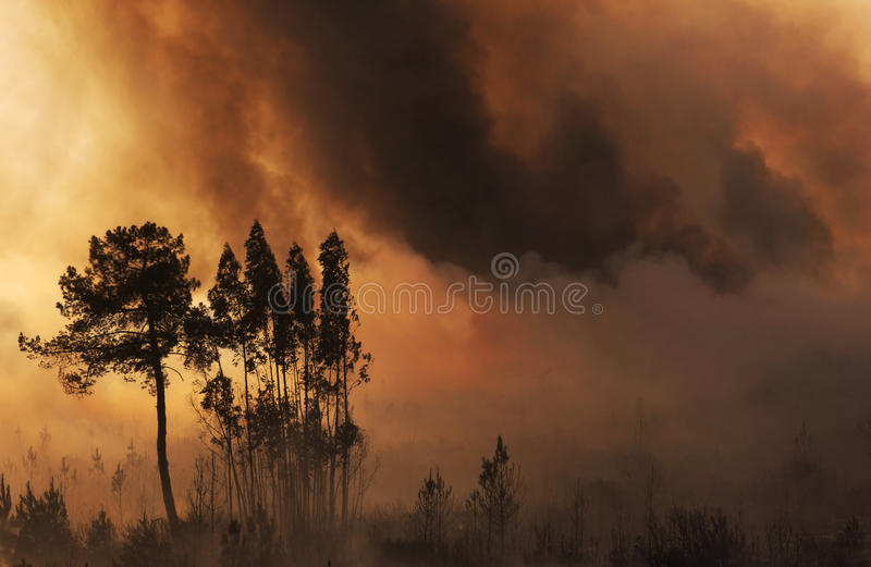 Fire and forest royalty free stock image