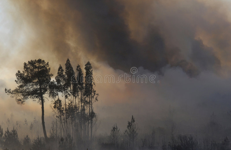 Fire and forest stock image