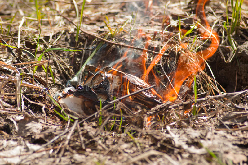 Download Fire in the forest. stock image. Image of death, trees - 31469437