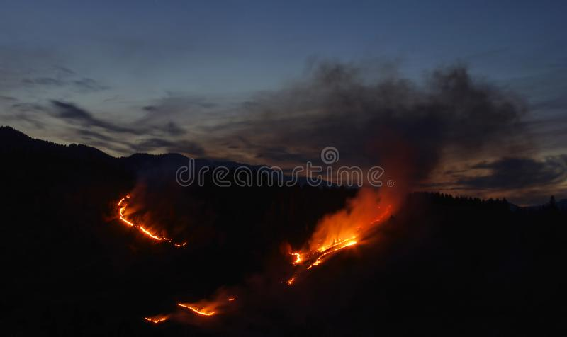 Fire in the forest, night scene royalty free stock image