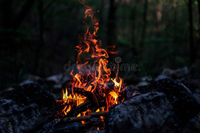 Fire, forest, fire in the forest, bonfire, coal, fire at night, beautiful fire royalty free stock image