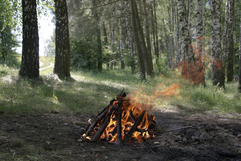 The fire in the forest. In summer royalty free stock image