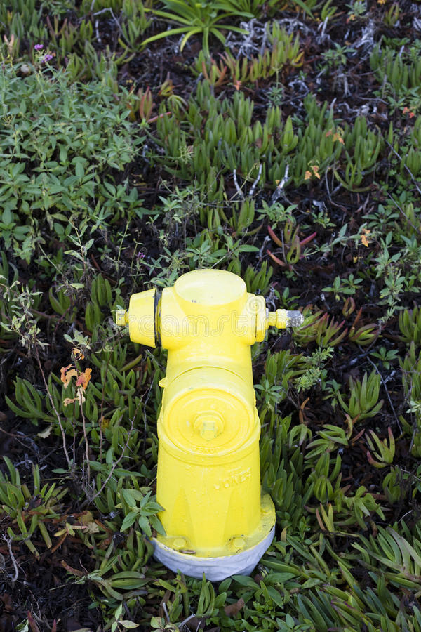 Download Fire Hydrant stock image. Image of rescue, vertical, safety - 12265653