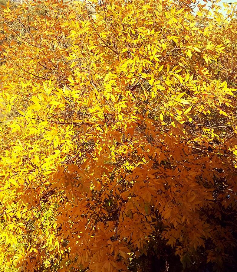 Fire leaves. royalty free stock photos