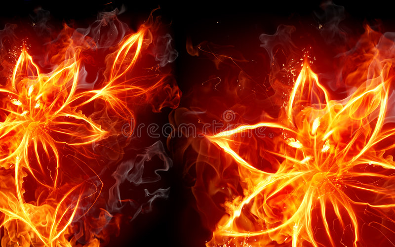 Fire lily royalty free illustration