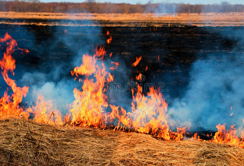 Fire on the nature royalty free stock photo